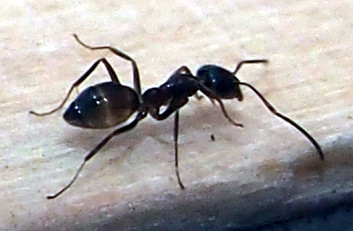 Neue mitbewohnerinnen im wagen beside the road - Ameisen in der wand ...
